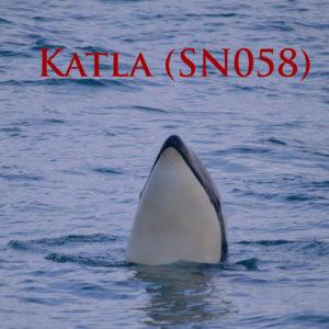 Katla Cover