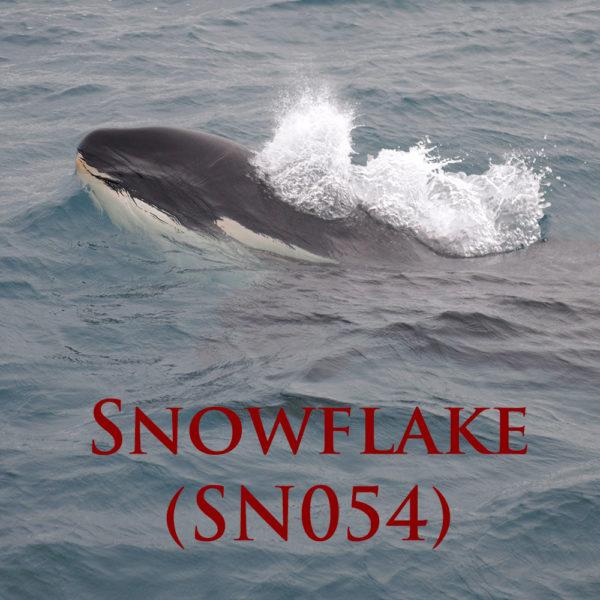 Snowflake Cover