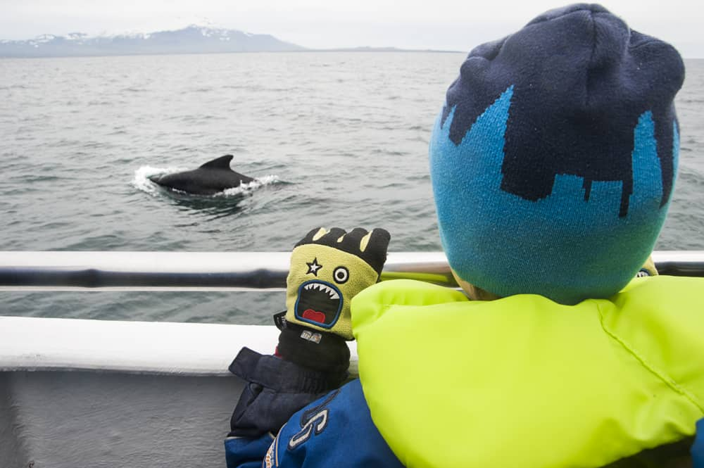 Thor Watching a Big Group of Pilot Whales from the Láki II in July 2016