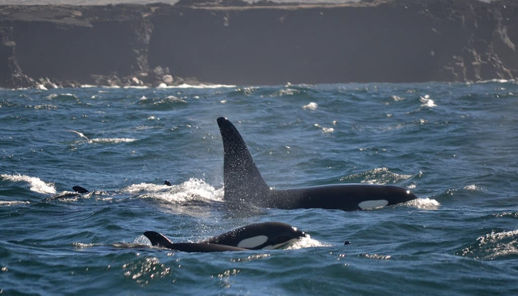 Mindful Orca Encounters